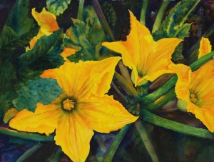 zucchini blossoms-WillRay