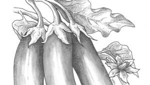 3_Eggplant_Hansel_Art