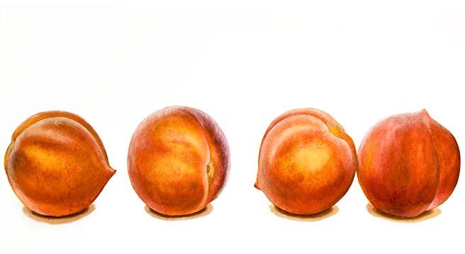 Nicola_Wiehahn_Botanical_Portfolio_Peaches