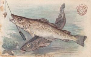 567TradeCodFish2