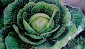 august_18_original_mixed_media_watercolor_color_paper_cabbage_897a2d311b7700fbca0a3e4f1ba8bfa8