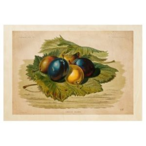 5_vintage_plums_painting_wood_poster-r8640f0f48ccc40c3977d91418dc50ac5_678j8_512
