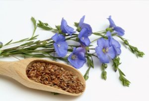 photolibrary_rm_photo_of_flax_seeds_and_flowers
